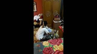 সাভার ধামরাইয়ের নলক হিজরা বাহিনির অপো করমো