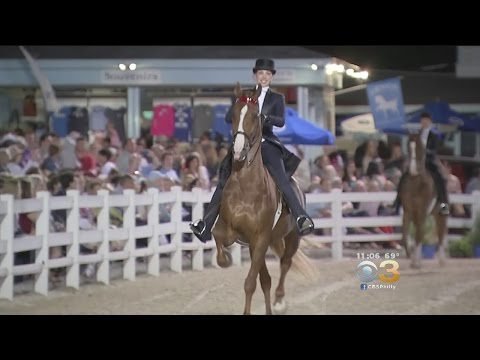 Some Devon Horse Show Prizes Valued At $100,000