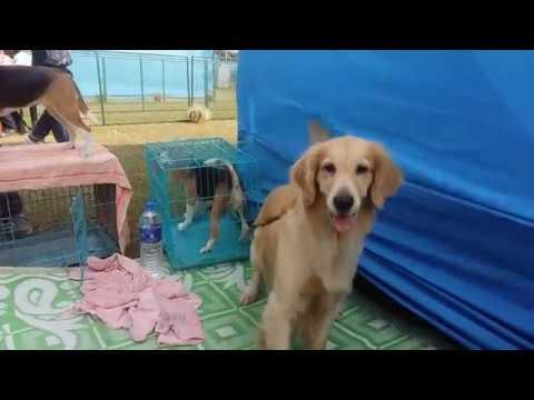 The Dog Show   Jamshedpur   For Dog Lovers    Rameez.star  