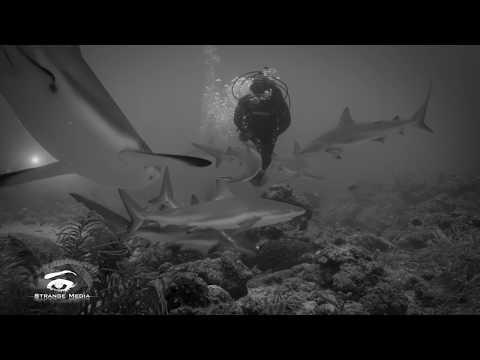 Shark Class