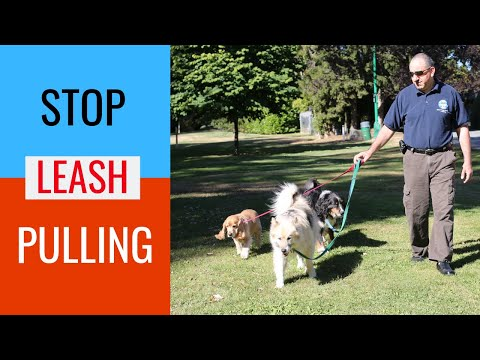 How To Train A Dog To Walk On A Leash Without Pulling