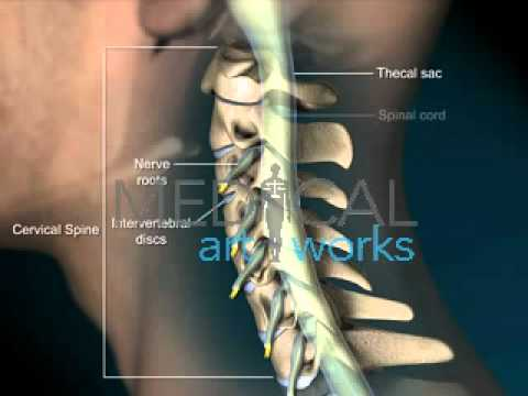 3D Medical Animation | Male Normal Cervical Spine Anatomy - YouTube