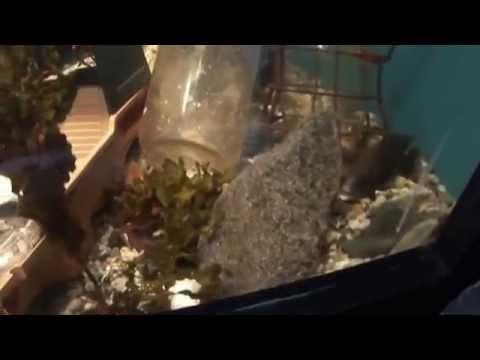 Watch Fish Living Among People's Trash