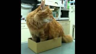 動物病院ネコ、片目のジャック。あなたの身体では無理があるんだけどね~