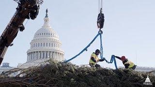 2019 U.S. Capitol Christmas Tree Arrival