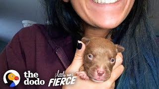 Tiniest Puppy Transforms Into A GIANT Pit Bull | The Dodo Little But Fierce