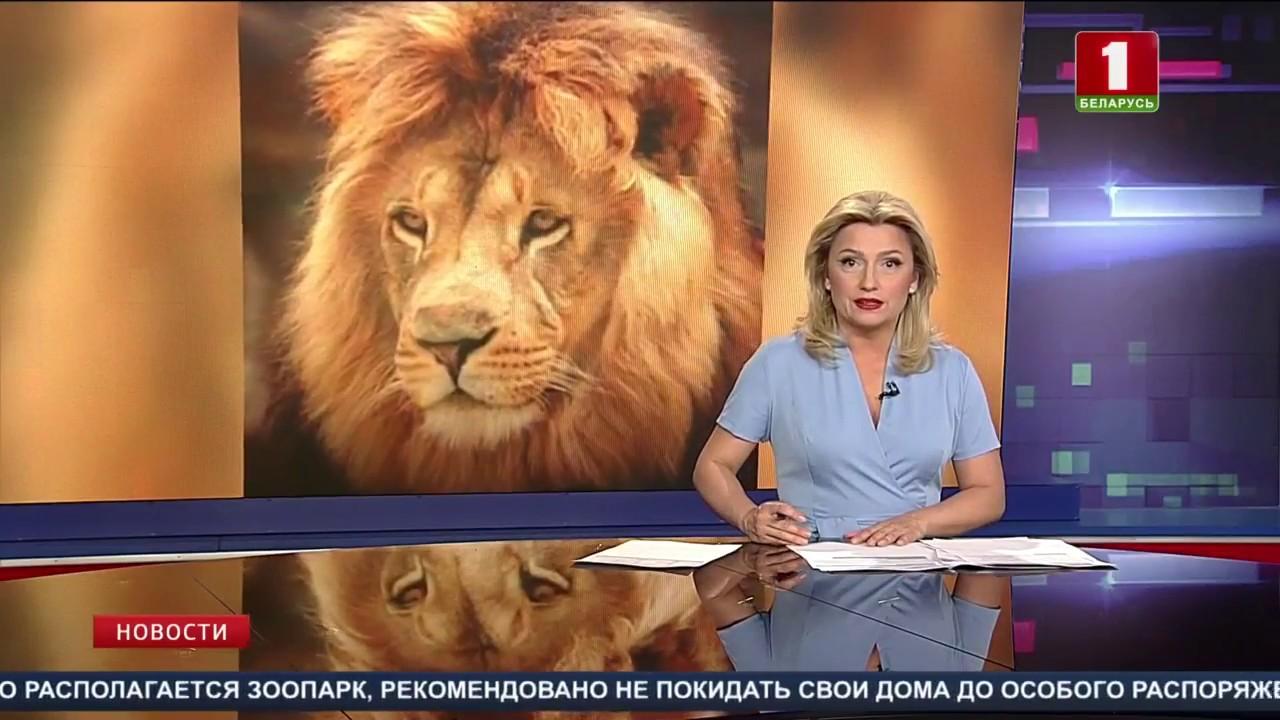 В Германии из зоопарка сбежали опасные хищники