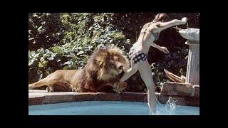 15 Cases Of Animals That Took Revenge