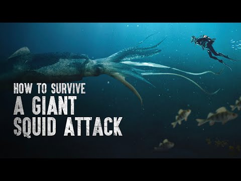 How to Survive a Giant Squid Attack