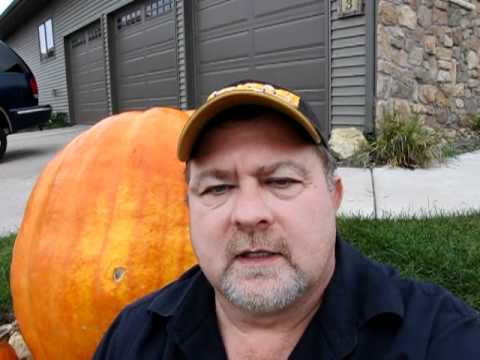 Zenvikings Iowa Pumpkin
