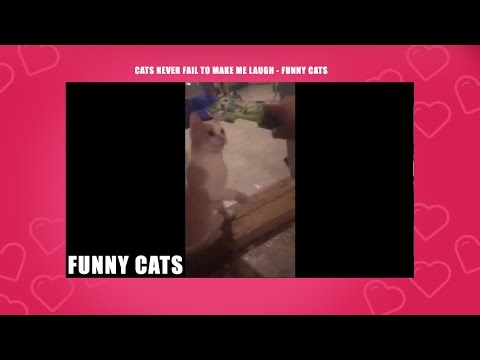 Top Funny Cat Videos - Cat Fails : Funny Cats -Pictures, Videos