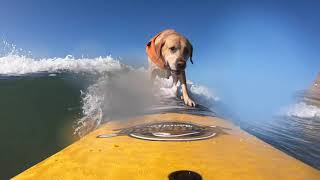 Surf day with Charlie