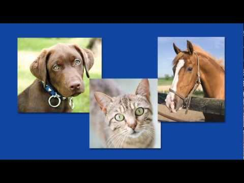 ACTT Allergy Drops, Sublingual Immunotherapy Treatment for Pets