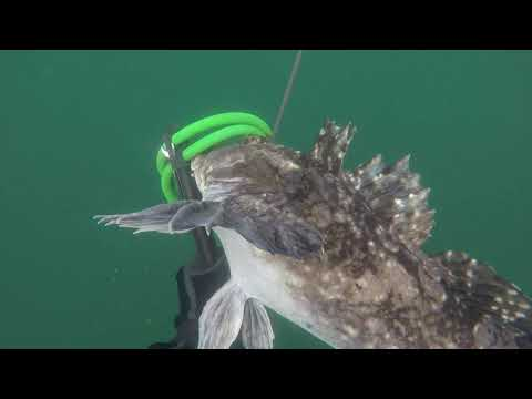Spearfishing The Oregon Coast