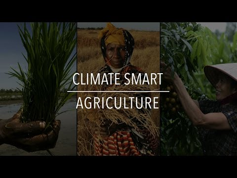 FAO Policy Series: Climate Smart Agriculture