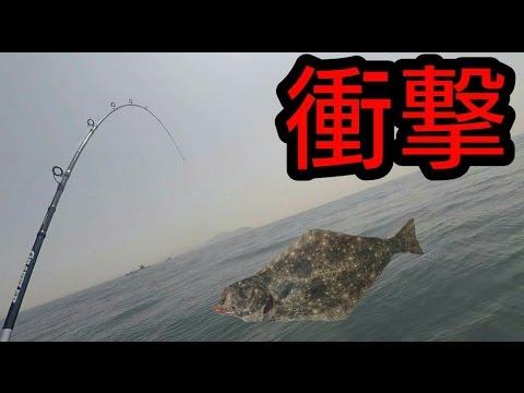 『変なルアー』でマダイ狙ってたら、巨大ヒラメが食いついてきた! 【ヒラメのさばき方