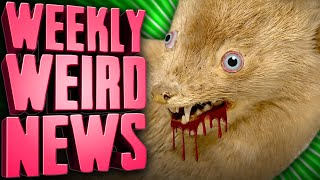Zombie Minks and Disappearing Monoliths - Weekly Weird News