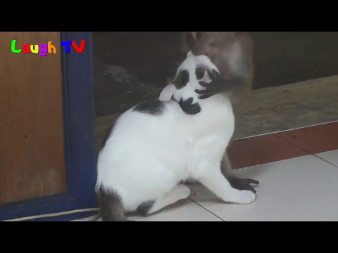 Funniest  Monkey Annoying Cat Videos Compilation ||NEW HD