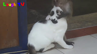 Download Funniest  Monkey Annoying Cat Videos Compilation ||NEW HD Mp3 and Videos