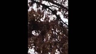 Tree tree Nimbly to bimbly from