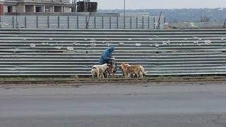 Мой город Николаев: Собаки на Намыве