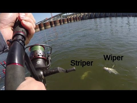 Fishing For AGGRESSIVE Fish With Light Tackle (Ft. Realistic Fishing)
