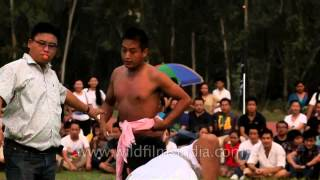 Wrestlers in full action :- At the 50th Naga Fest