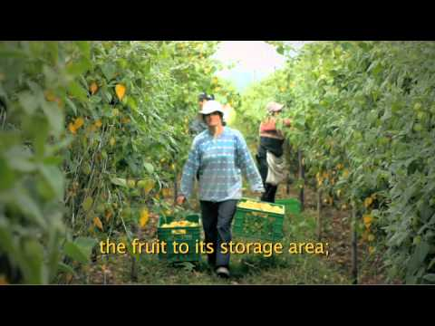 Organic Incaberry Farm Ecuador