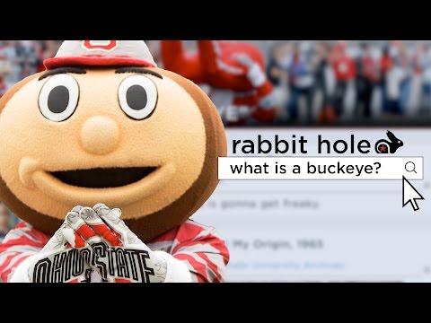 Why is Ohio State's mascot the buckeye?