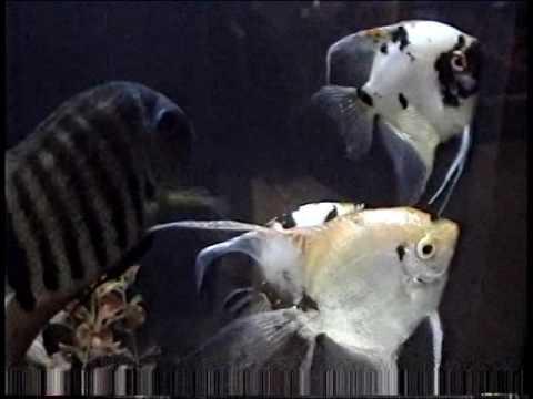 montreal, quebec aquarium, whale watching 1997 2