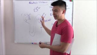 USMLE Renal 7: Electrolyte Disturbances Explained (Sodium, Potassium, and more!)