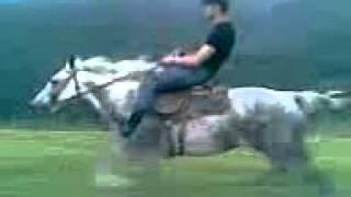 Нереально быстрая рысь у лошади