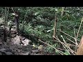 Bow And Arrow, Survival In The Tropical Rainforest, Ep 51