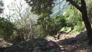 Monte di Portofino da S Rocco a S Fruttuoso di Camogli sulla via del Passo del Bacio