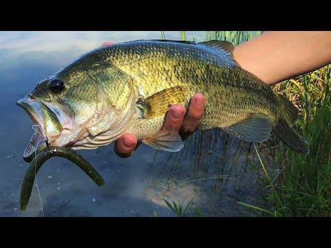 Crazy Wacky Worm Fishing In Michigan Ponds - V&M Chopstick