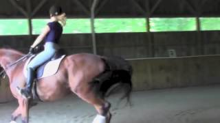 "Atlanto ""Atlas""- Dressage Horse For Sale"