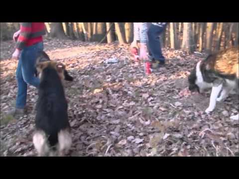 Un sauvetage dans les Carpates (05 décembre 2015)