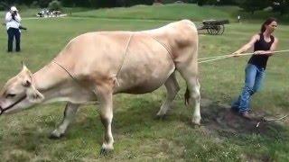 Как повалить Корову или Быка