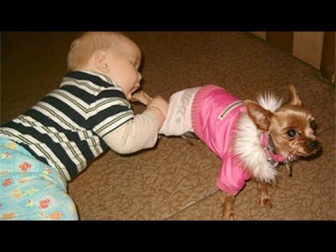 Babies and Dogs Funniest Videos –  Dog make Baby Fails Funny
