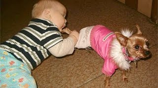 Babies and Dogs Funniest Videos -  Dog make Baby Fails Funny