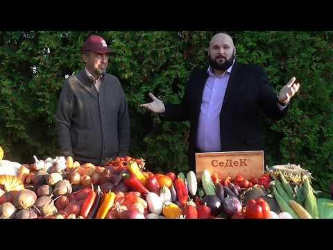 Как начать бизнес по продаже семян? Как зарабатывать на своем огороде?