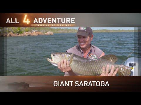 Huge Northern Saratoga action on Groote Eylandt ► All 4 Adventure TV