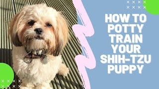 **HOW TO POTTY TRAIN SHIH-TZU PUPPY | HOUSE TRAIN SHIH-TZU**A.S.A.P !!