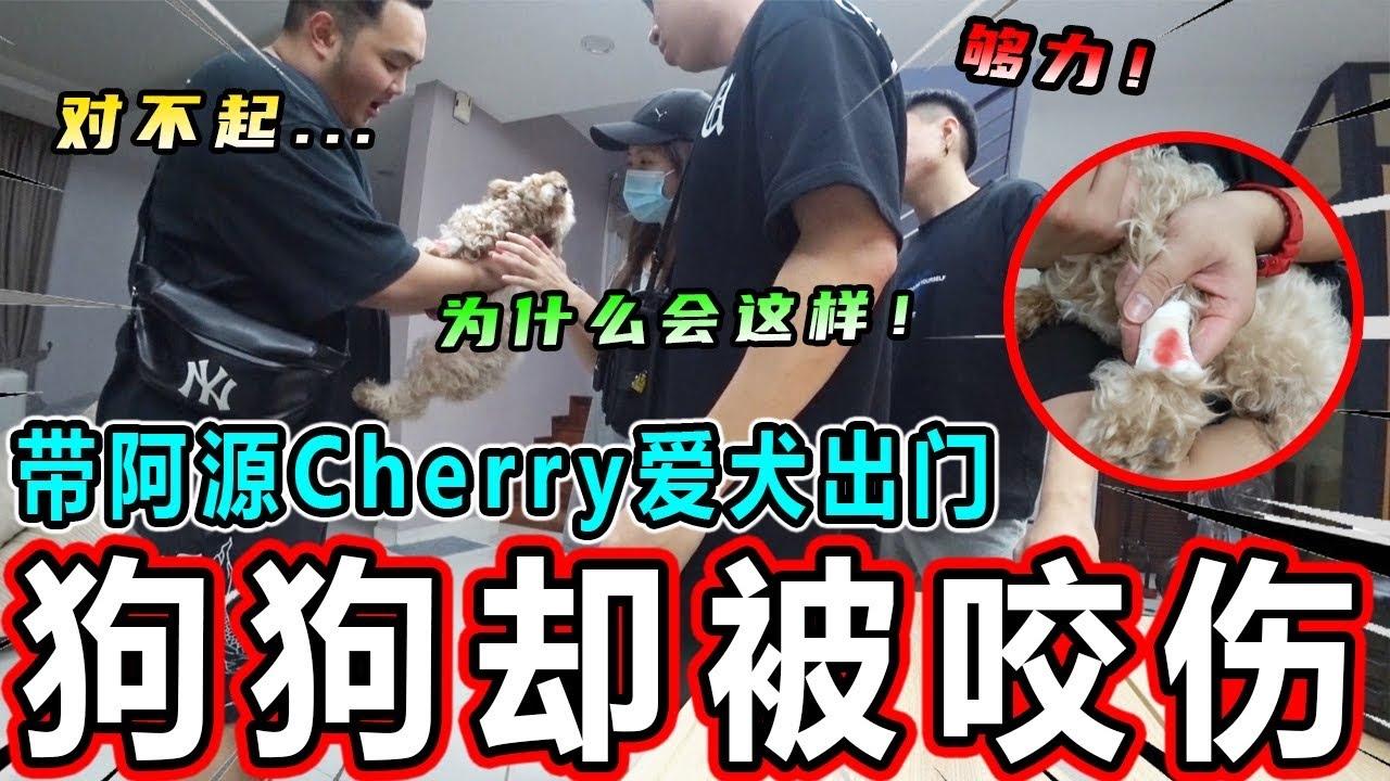 【紧急状况】带阿源Cherry的Onni出门....但是Onni无意间却被咬伤!!!Cherry紧张的爆哭?!