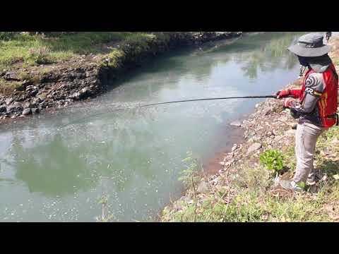 Mancing ikan melem kali elo dung sapi
