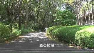 「アイアイランドの夏」 作詞・作曲:逢坂富子
