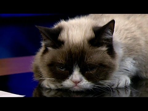 Grumpy Cat grilled by Andy Levy