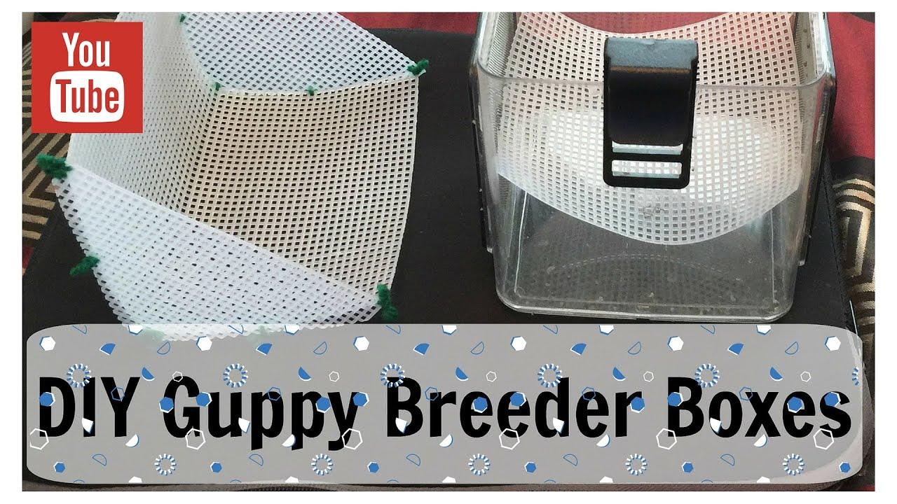 DIY Guppy Breeder Boxes - YouTube - photo#12