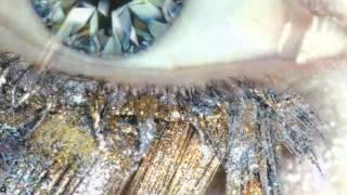 Obsessions (Ocelot Remix)