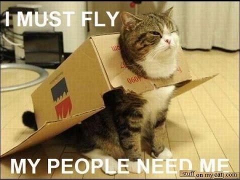 Как перевезти кошку в США. Сам переезд.